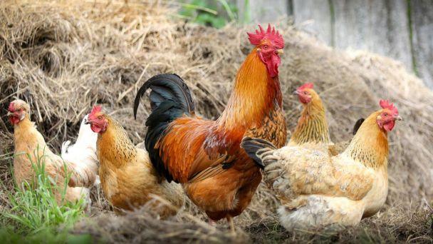 Informácie k výskyte vírusu vtáčej chrípky